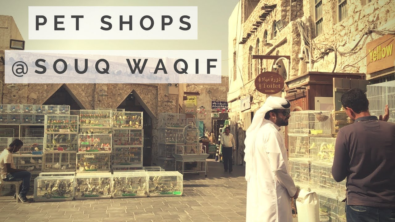 Pet Shops in Souq Waqif | Qatar Market