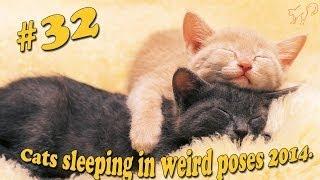 Кошки Приколы.
