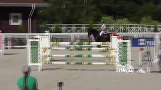 Westphalian Stallion, 9 years old