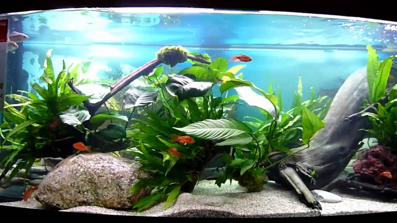 Zierfische aquarium duisburg 2010 youtube for Zierfische aquarium