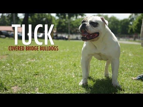 breed - Dizionario inglese-italiano WordReference