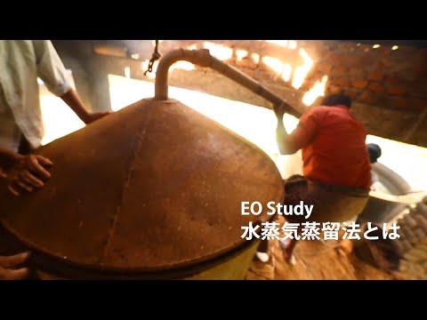 EO Study:水蒸気蒸留法とは