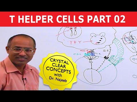 T Helper Cells - Immunology - Part 2/10 - YouTube