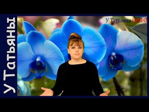 ГОЛУБАЯ ОРХИДЕЯ - миф или реальность? Как ухаживать за орхидеей (фаленопсисом).