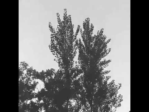 Árboles, no viento