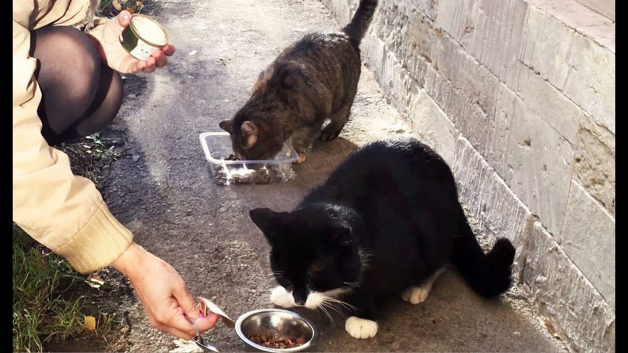 Feeding community cats