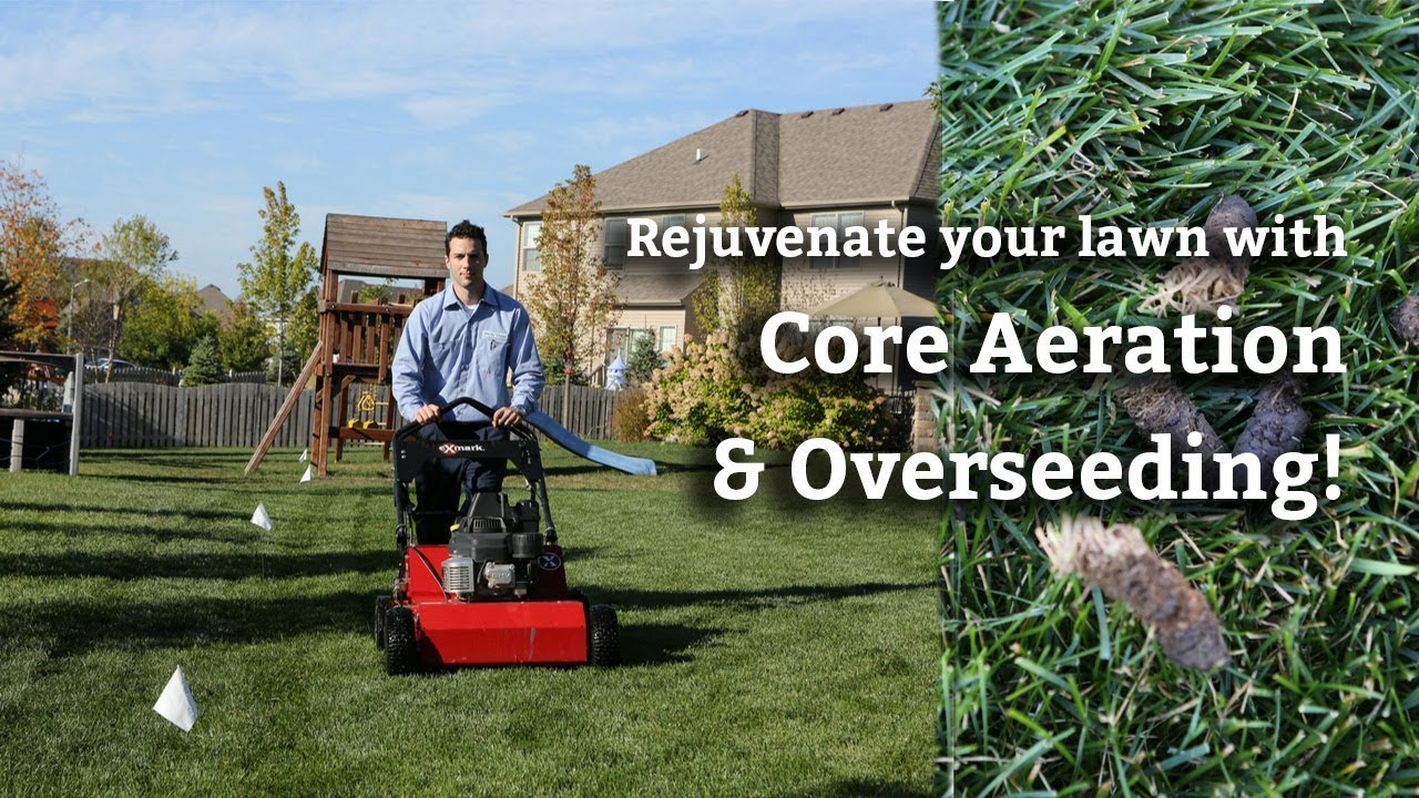 Core Aeration Overseeding Process Expert Lawn Care Tips