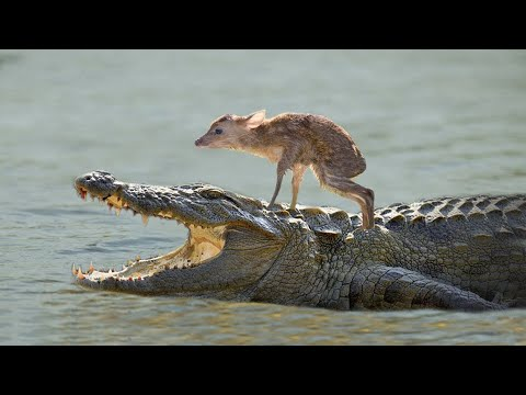 10 Unbelievable Animals That Saved Other Animals