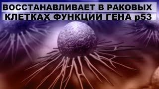 Лечебные свойства луковой шелухи. Восстанавливает в раковых клетках функции гена р53