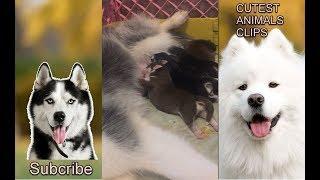 CUTEST ANIMALS IN THE WORLD #17 - Cute Puppies drinking milk