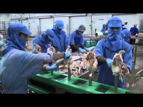Poultry Processing in India - From Plan to Plant