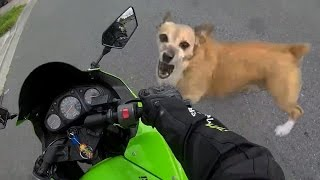 Angry Dogs Vs Bikers - WHEN DOGS ATTACK!!