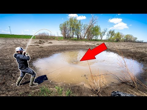 Catching GIANT Fish In TINY PUDDLE!!! (CATCH CLEAN COOK)
