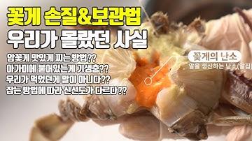 알배기 암꽃게 손질 보관법 맛있게 찌는법 꿀팁!! 꽃게 아가미에 기생충이?