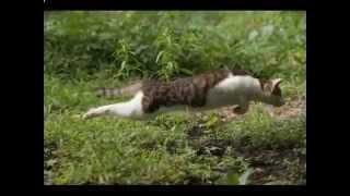 Кошки и котята,Очень смешные фото  Cats and kittens1