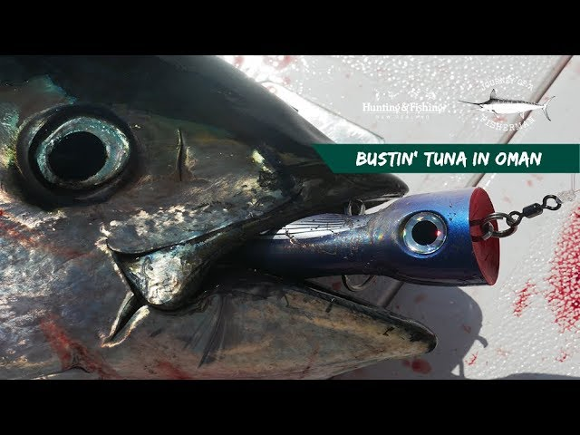 Bustin' Tuna (Oman 2019)