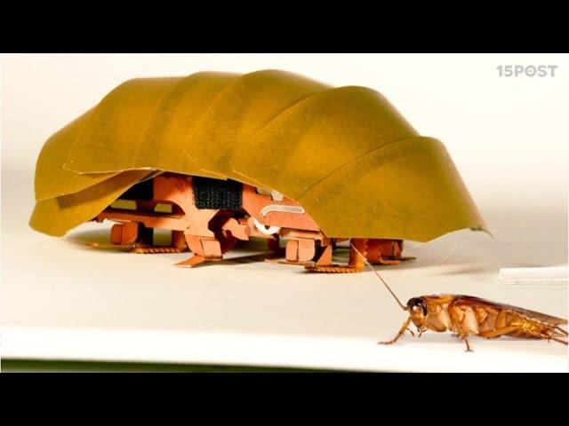 Cucaracha robot ayudará en el rescate de personas después de un desastre