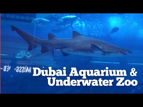 Dubai Aquarium & Underwater Zoo | Mall of Dubai |  Fascinating aquatic world.