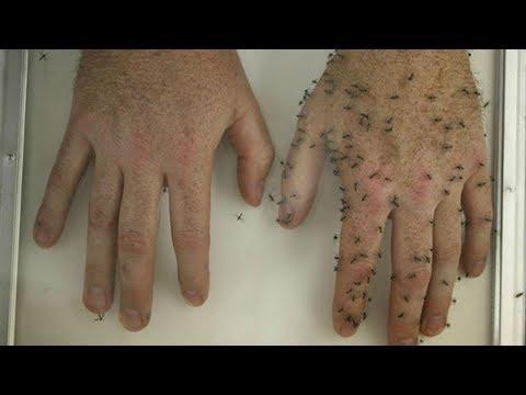 Вопрос: Как избавиться от укуса комара?