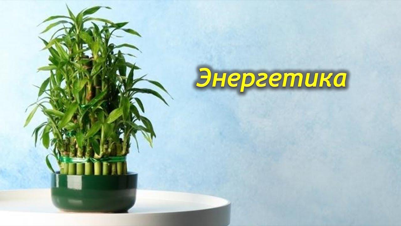 Энергетика комнатных растений.