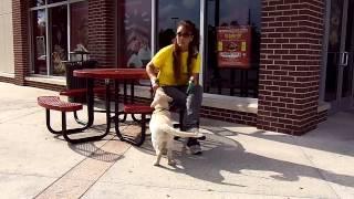 Labrador Puppy Training Ruff Treat Training