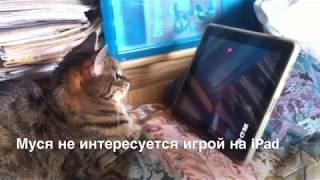 Как две кошки относятся к игре Cat Fishing, Laser Kitten на iPad