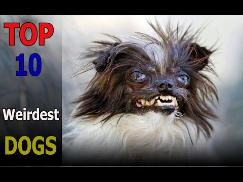 Top 10 weirdest dog breeds | Top 10 animals