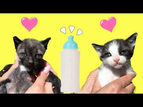 Mis gatitos bebés Luna y Estrella tomando su primer biberón / Funny cats