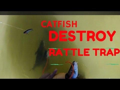 Catfish DESTROY Rattle Trap!!! - Livingston Dam
