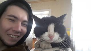 коты умеют говорить
