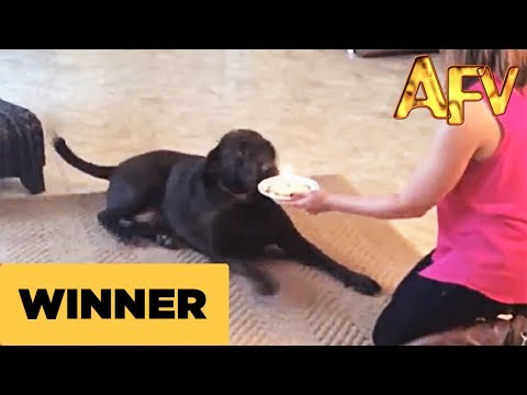Happy Birthday Dog - AFV Prize Winner - AFV