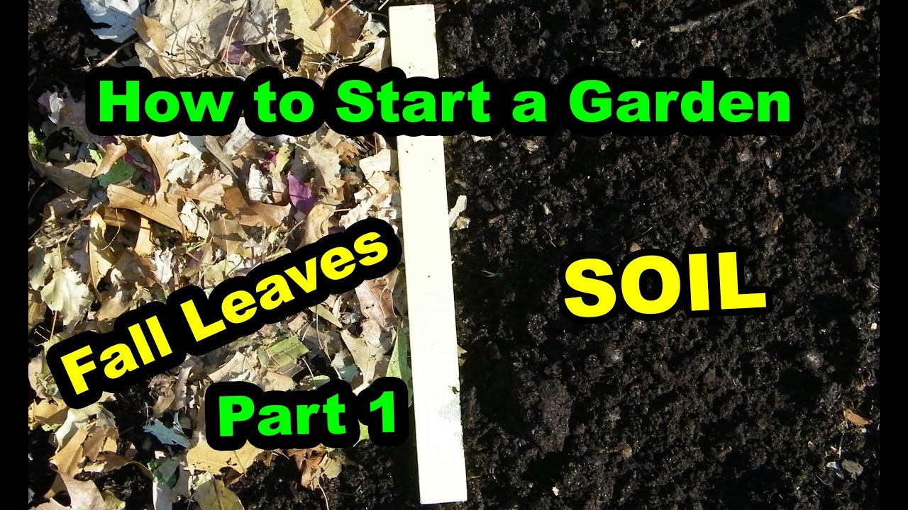 How To Start A Vegetable Garden Or Food Forest For Beginners With Composting Fall Leaves Part 1
