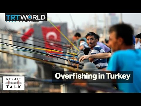 How overfishing and pollution have reduced the number of fish in Turkey | Strait Talk