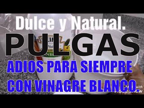 Como Acabar Con Las Pulgas En La Yarda Como Acabar Las Pulgas Con Vinagre Blanco Dulce Y Natural