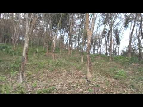 low price rubber land sale in nedumangad trivandrum kerala real estate rubber estate