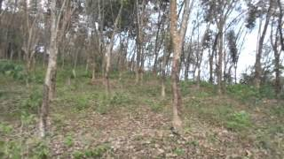 low price rubber land sale in nedumangad trivandrum kerala real estate rubber estate