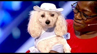 Mia Moore: The DOG Who Can Count & Read! UNREAL! | Auditions 2 | America's Got Talent 2017