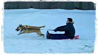 ПРИКОЛЫ С ЖИВОТНЫМИ | FUN WITH ANIMALS #332