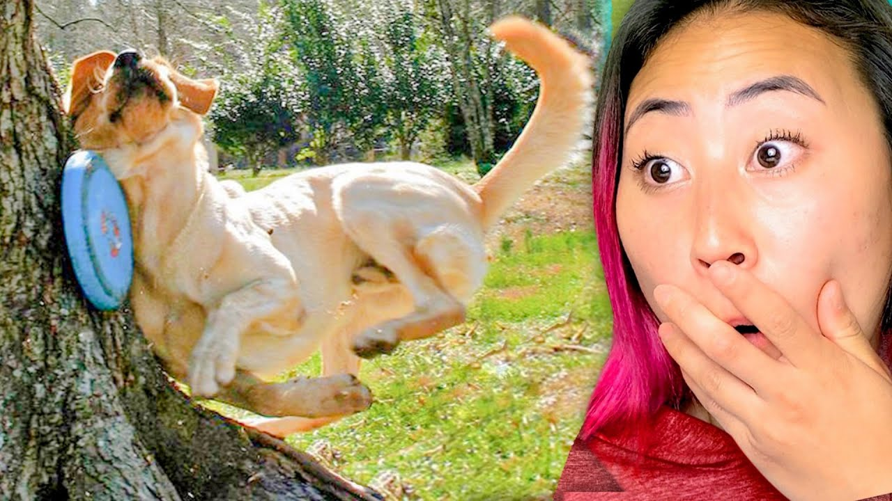 TRY NOT TO GASP 😱(ANIMAL EDITION!!)