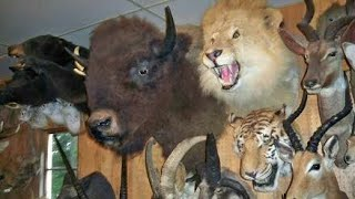 Taxidermy Documentary -Documentary