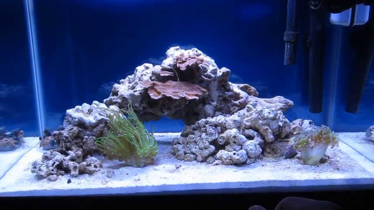 Pics for 10 gallon saltwater fish tank for Saltwater fish for 10 gallon tank