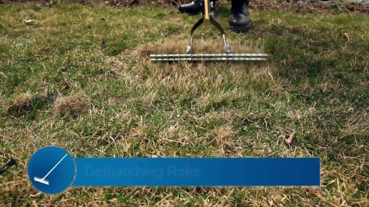 Tips For A Better Yard Dethatching And Aerating Youtube