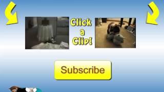 Śmieszne zwierzaki   Smieszne psy i Śmieszne koty 24