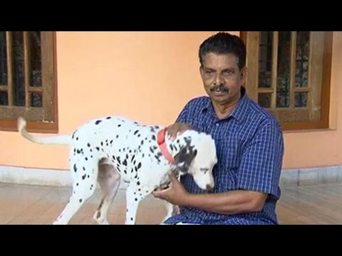 Want To Own A Dog You Need A Licence In This Kerala Town Youtube