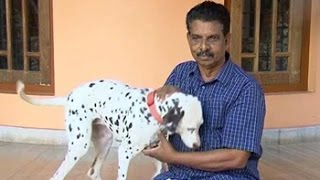 Want to own a dog? You need a licence in this Kerala town