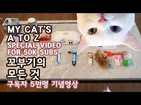 꼬부기의 모든 것: 집, 용품, 관리, 좋아하는 공간들 - 구독자 5만명 기념영상 MY CAT'S A TO Z