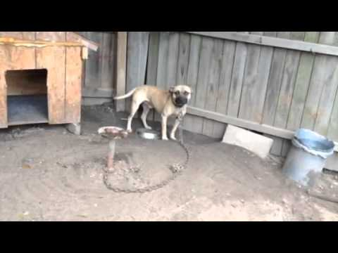 T-MACK'S GARGOLA (2XW) PURE BLACKROCKS MEXICO ELI | FunnyDog TV