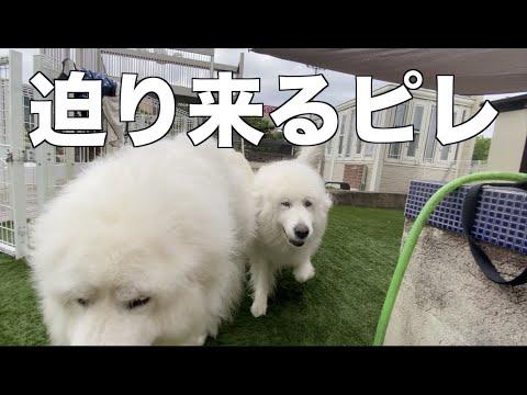 雨の中でも元気に過ごす愛犬たち