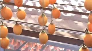 Fuyu Japanese Persimmon kabuksoyma ve kurutma2