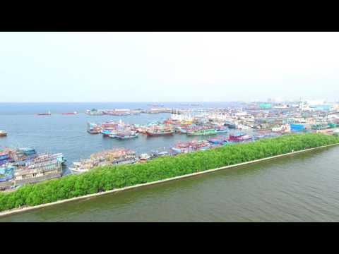Mangrove Breakwater of Jakarta Fishing Port